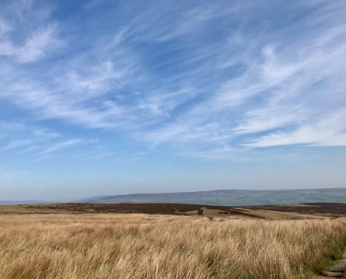Autumn morning on Ilkley Moor showing pale gold grasses and the north moors in the distance